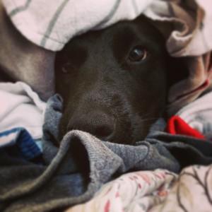 penelope laundry